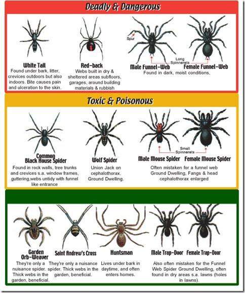 spiderchart